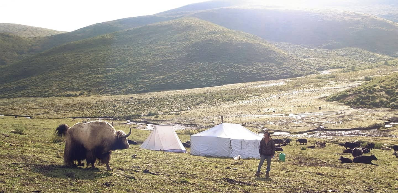 千年以來,藏區的高原是北方牧人的家鄉,氂牛與羊不只是他們在高原上艱困生活的同伴,更提供了他們生活中食衣住行的一切所需。